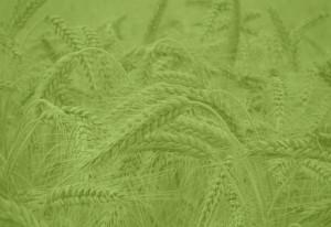 Mediatyche agenzia green