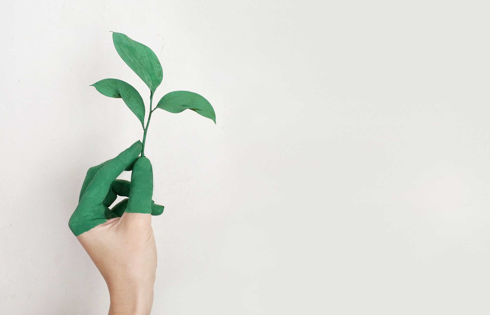 ecologia sostenibilità