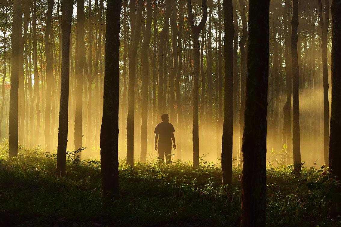 riforestazione bosco alberi